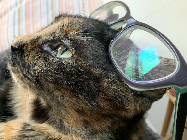 Ella, Chief Feline Officer at Ahimsa Media