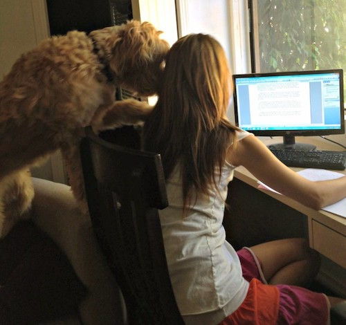 Mango and Lori hard at work in one of our virtual offices.